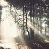 HAPPY BABY Звуки Природы Для Малышей - Kuckuck Ruft's Aus Dem Wald