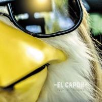 El Capon - Shut Up Chicken