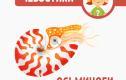 Осьминоги и другие моллюски. Часть 2